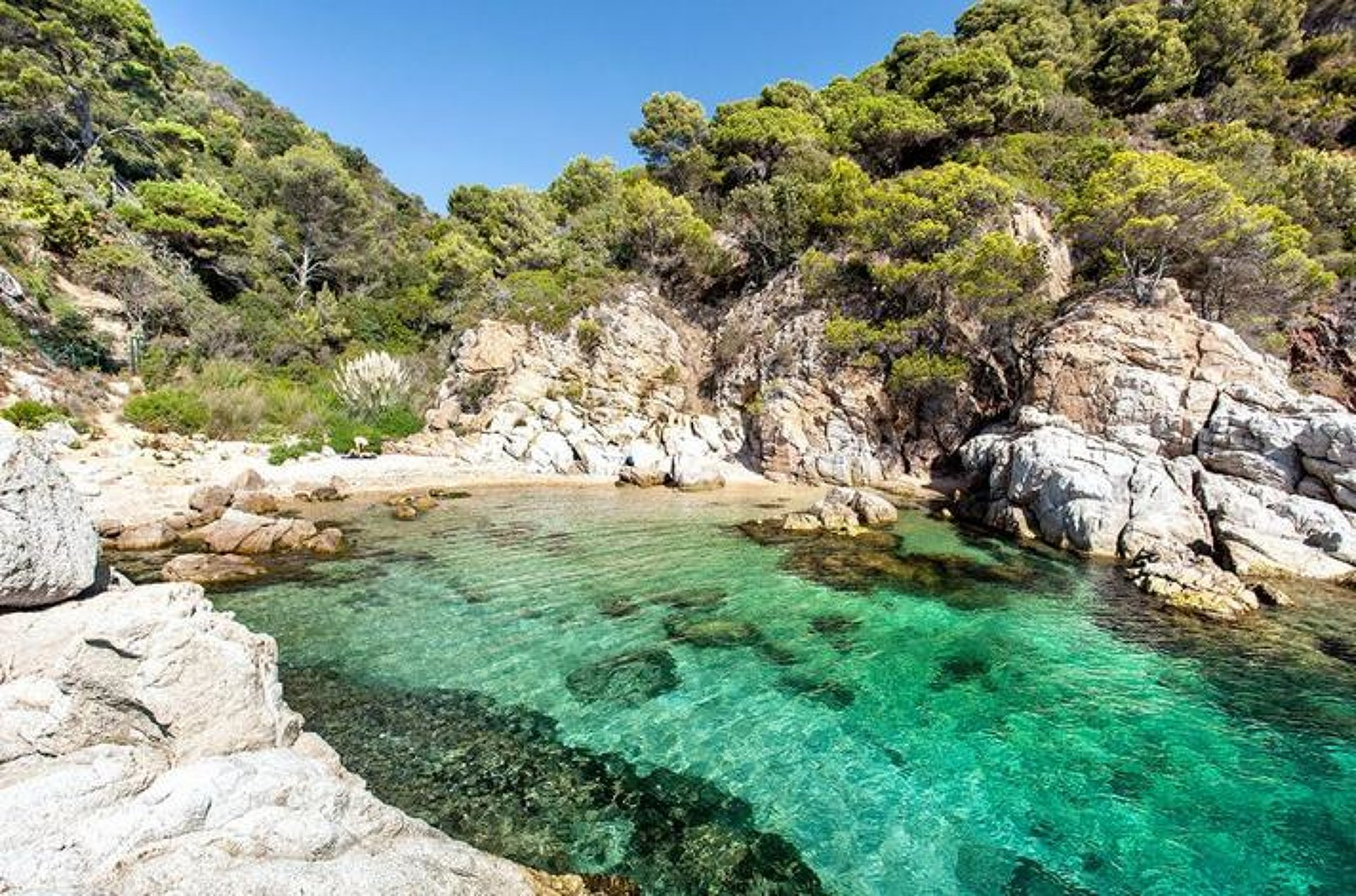 The 15 best coves de Llafranc